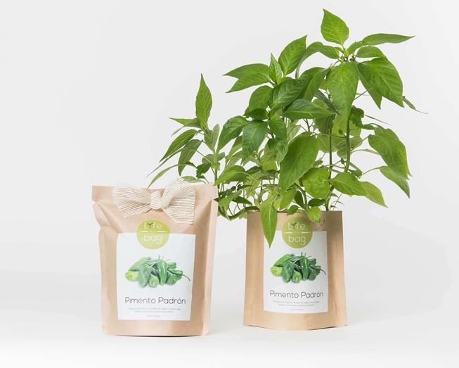 Picture of Grow Bag Pimento Padrón