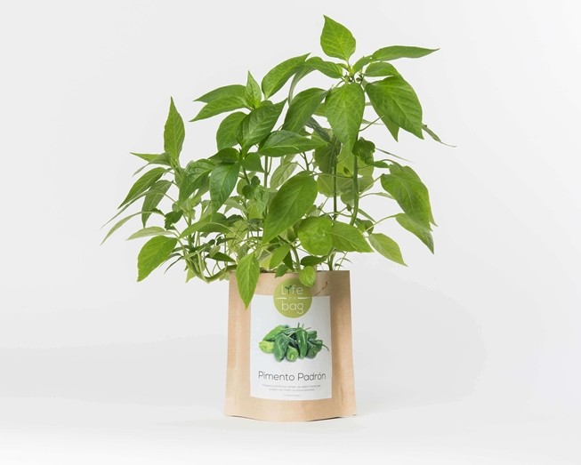 Grow your own Padron pepper in this bag