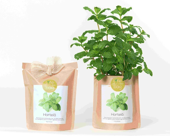 Grow your own peppermint in this bag