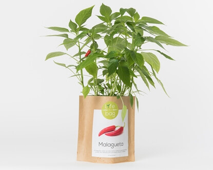 Bild von Grow Bag Chilischote