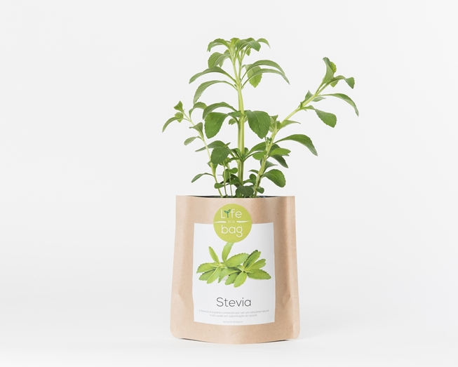 Picture of Grow Bag Stevia