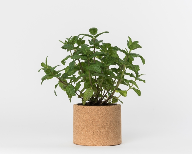 Grow your peppermint in this cork pot