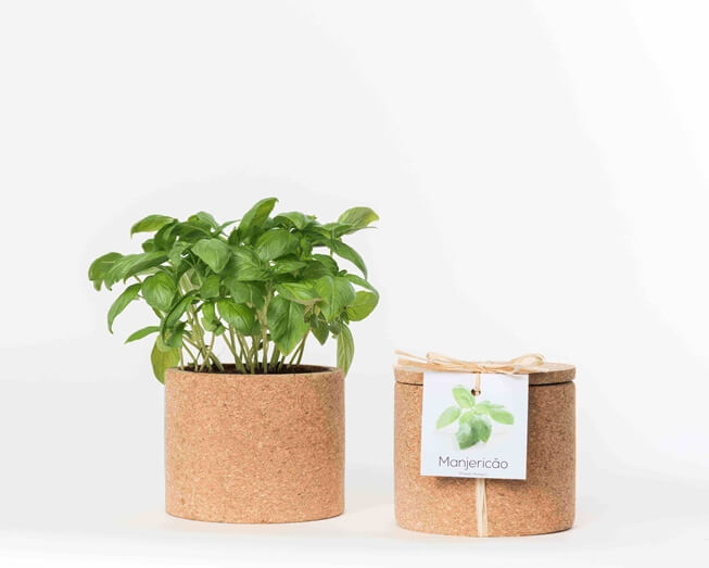 Grow your basil in this cork pot
