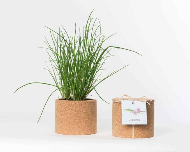 Grow your chives in this cork pot