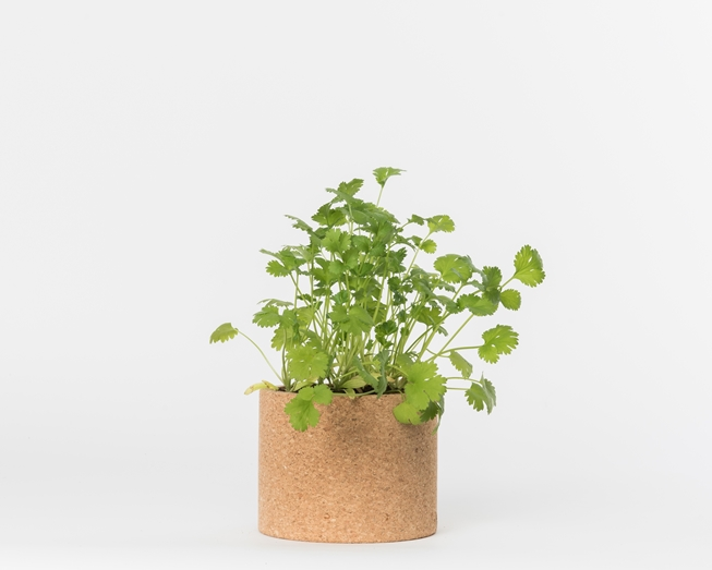 Grow your coriander in this cork pot