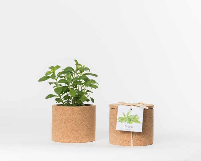 Picture of Stevia Grow Cork