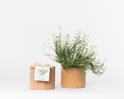 Image de Grow Cork Thym
