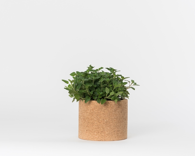 Foto de Grow Cork Oregano