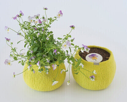 Picture of Wild Pansy Wool Pot