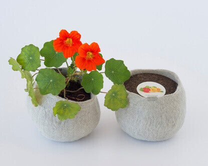Picture of Nasturtium Wool Pot