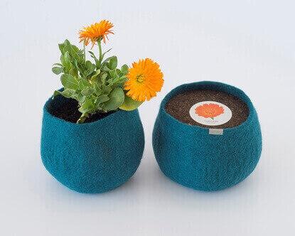 Image de Wool Pot Calendula