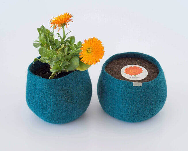 Picture of Calendula Wool Pot