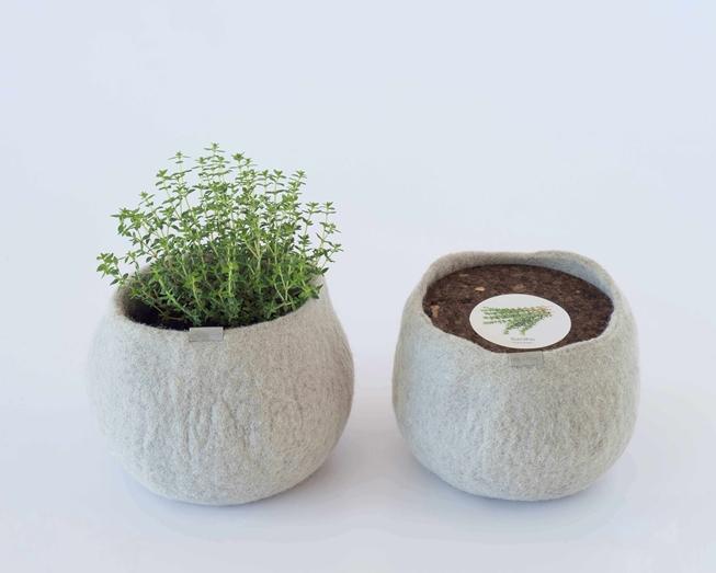 Um pote 100% lã para cultivar tomilho