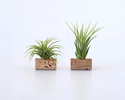 Foto de Conjunto de 2 plantas