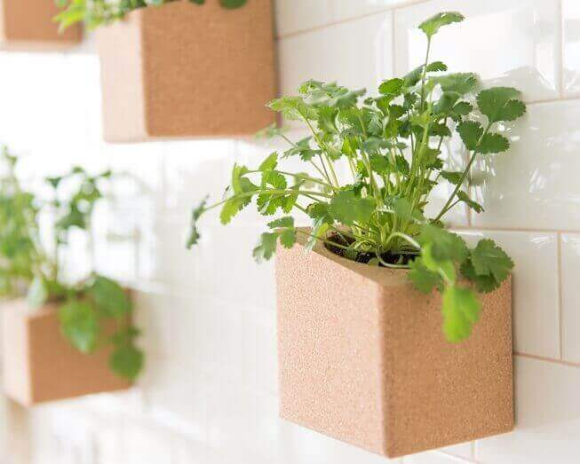 Grown your own vertical garden indoors with two pots from the cork block