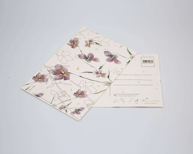Picture of Plantable postcard with Wild Pansy Illustration