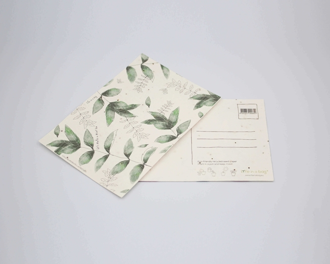 Picture of Plantable postcard with Peppermint Illustration