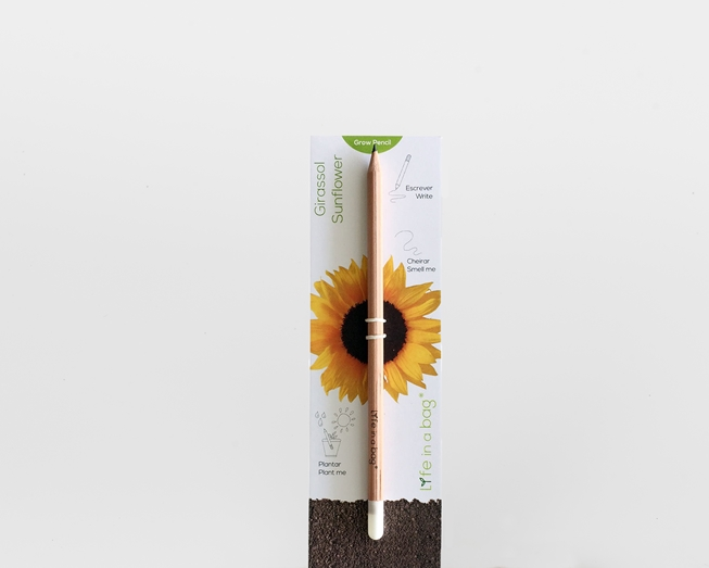Image sur Grow Pencil Tournesol
