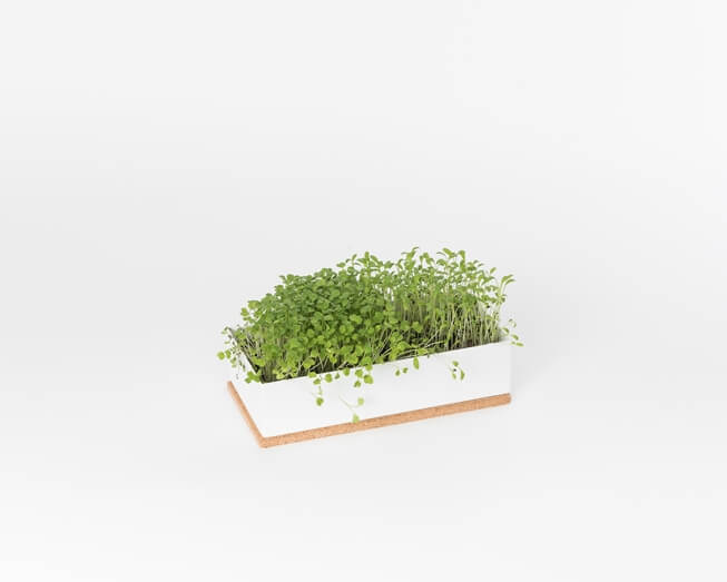 Grow microgreens of beetroot, broccoli and cress