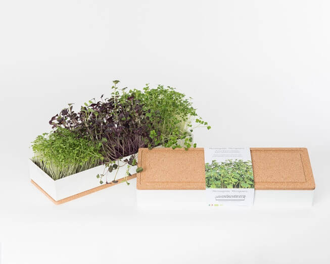 Grow microgreens of radish, broccoli and rocket