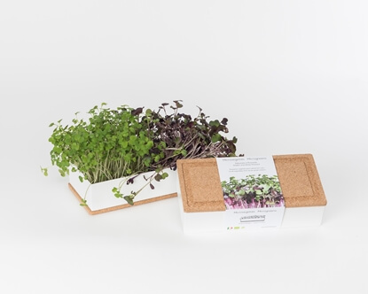 Grow microgreens of radish and white mustard