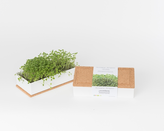 Grow microgreens of rocket and cress