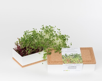 Grow microgreens of beetroot and broccoli