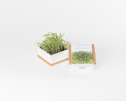 Grow microgreens of cress