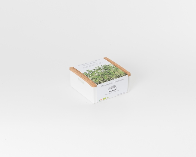 Grow microgreens of white mustard