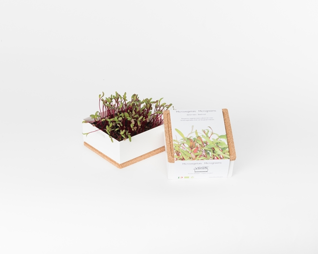 Grow microgreens of beetroot