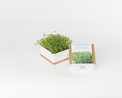 Grow microgreens of rocket