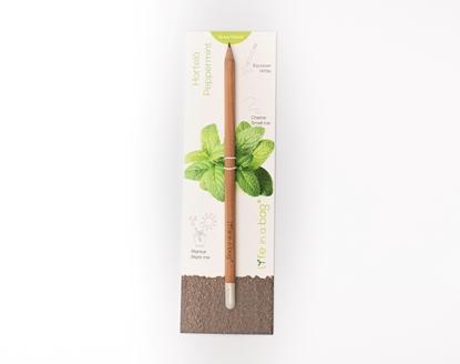 Bild von Grow Pencil Minze