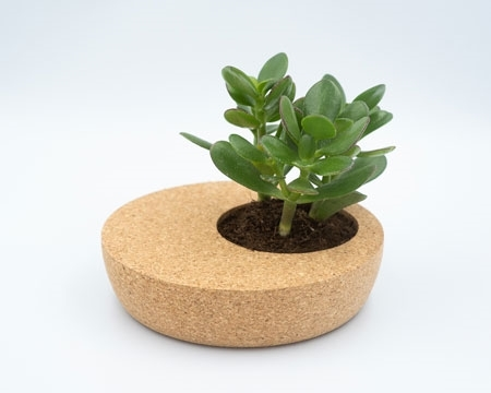 Picture for category Cork Planter