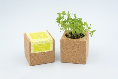 Cork cube with magnet to grow coriander