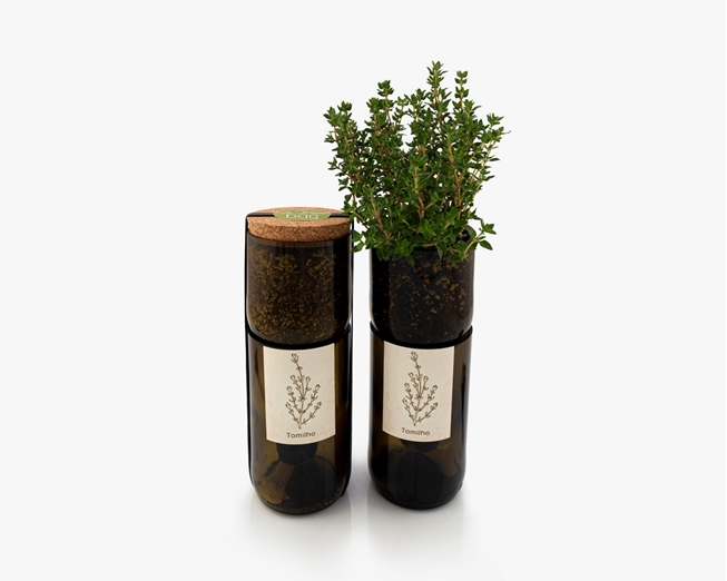 Grow thyme in this bottle