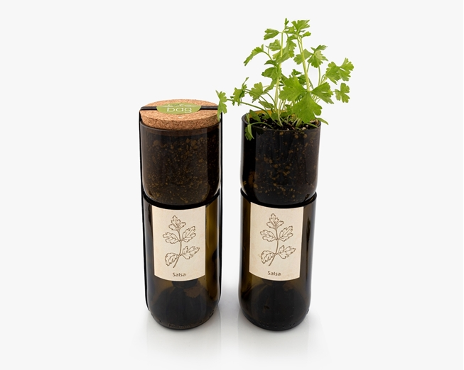 Grow parsley in a bottle