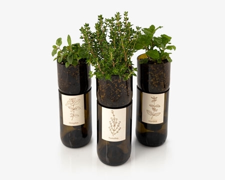 Picture for category Grow Bottle Herbs