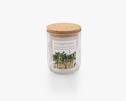Cultivar microvegetais de alfafa sem ter de regar