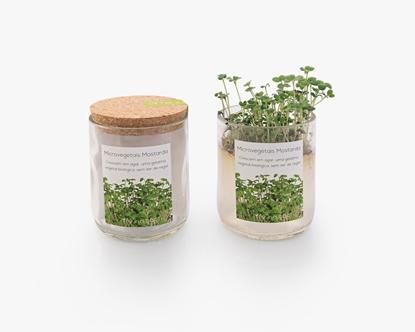 Cultivar microvegetais de mostarda branca sem ter de regar