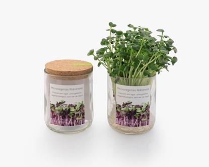 Cultivar microvegetais de rabanete sem ter de regar