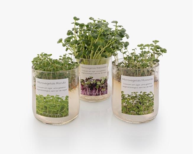 Cultivar microvegetais de rúcula sem ter de regar