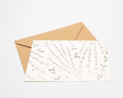 Postal para plantar - tomilho